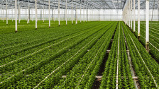 Grodan, Precision Growing, Agriculture, Plants